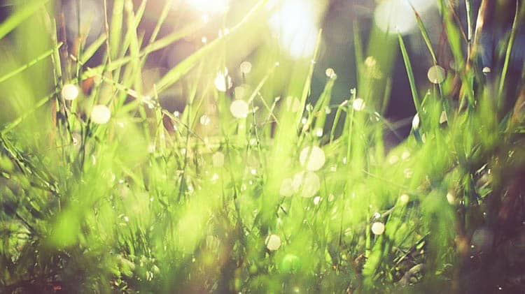 Dew in Grass_cropped (507) 2